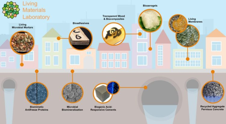 Бактерий научат строить дома